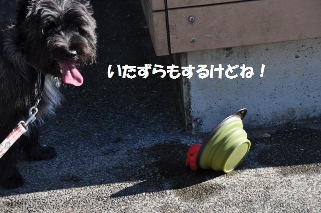 DSC_0286_convert_20131010155706.jpg