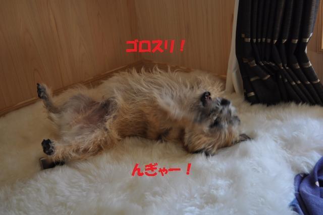DSC_0310_convert_20131010160150.jpg