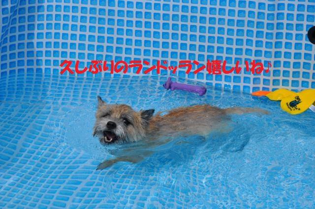 DSC_0365_convert_20130818140905.jpg