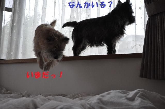 DSC_0365_convert_20131026210146.jpg