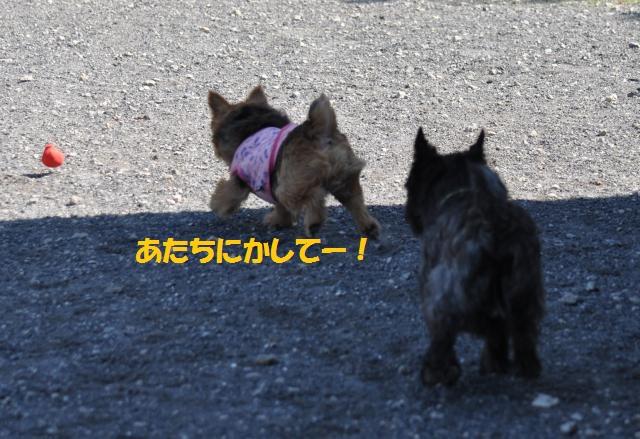 DSC_0374_convert_20131013211631.jpg