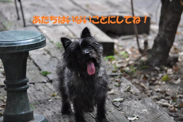 DSC_0410_convert_20130818142653.jpg