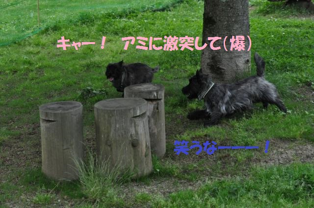 DSC_0482_convert_20130624232630.jpg