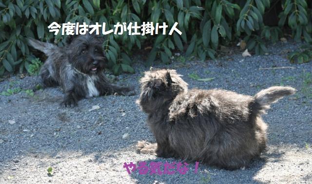 DSC_0609+(2)_convert_20131016214019.jpg
