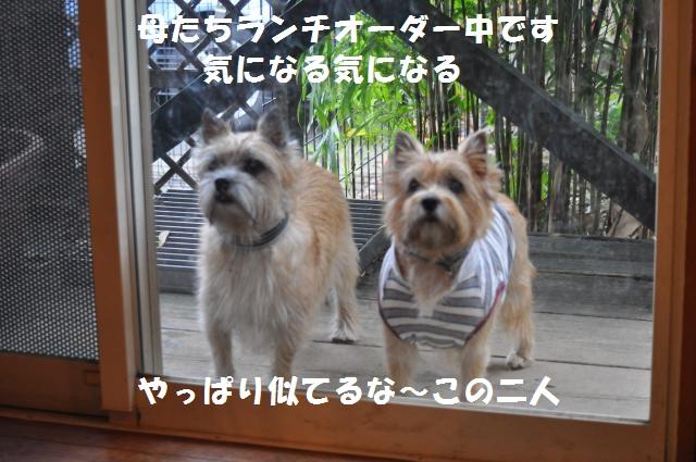 DSC_0987_convert_20131106001638.jpg