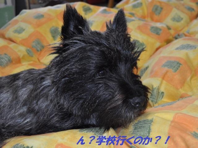 SSC_0642_20130412134701.jpg