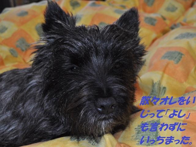 SSC_0644_20130412134700.jpg