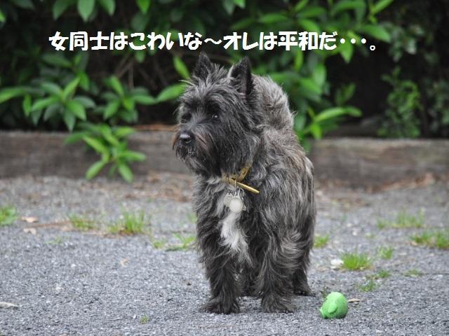 SSC_0921_20130426182839.jpg