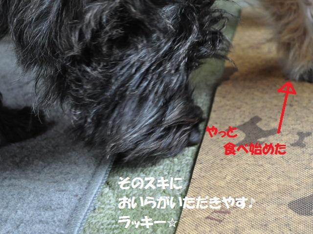 SSC_1065_20130602143451.jpg