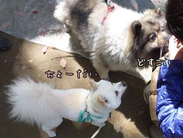 azuharu130421_2.jpg