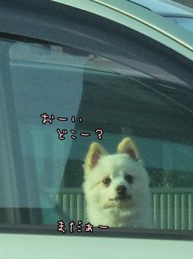azuki130309a.jpg