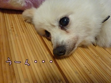 azuki130903.jpg