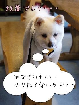 azuki131005_1.jpg
