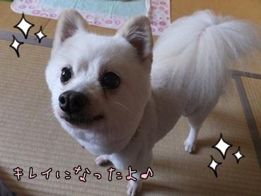 azuki131104_3.jpg