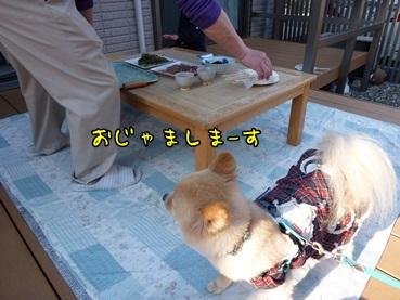 bbq130503_5.jpg