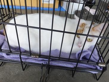 cat131012.jpg