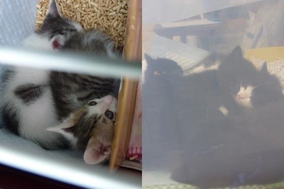 cats130519-horz.jpg
