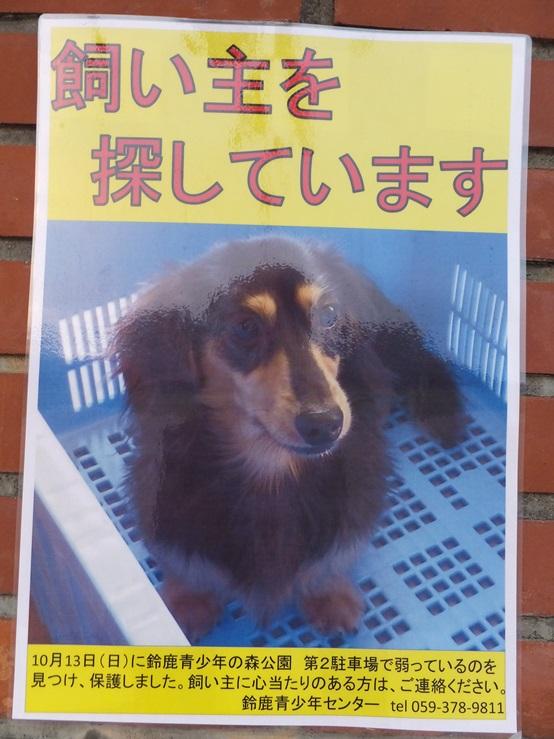 dog131102.jpg