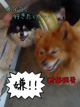 fukuju130421.jpg
