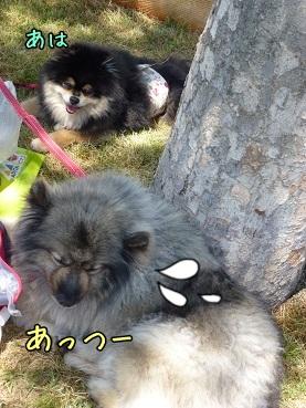 harufuku130512.jpg