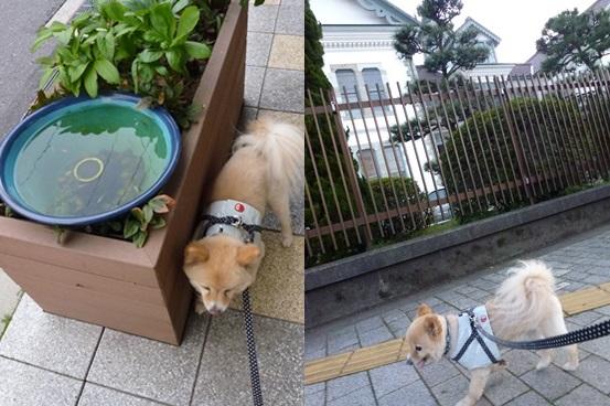 kamifuru130427_6-horz.jpg