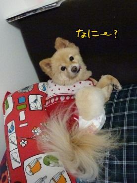 kinako130324.jpg