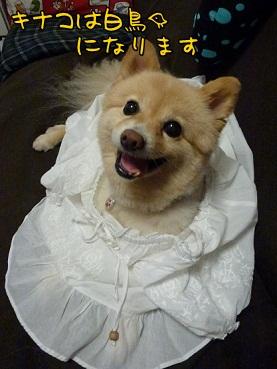 kinako130814.jpg