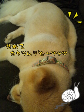 kinako131010_2.jpg