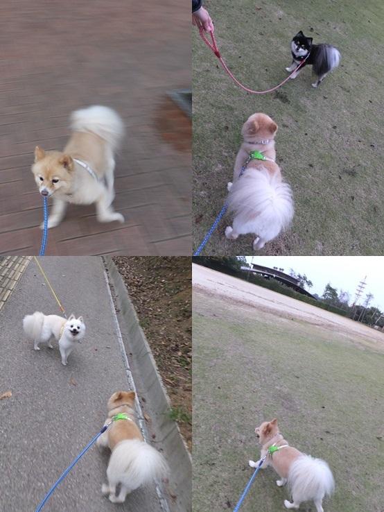 kinako131102_2-tile.jpg