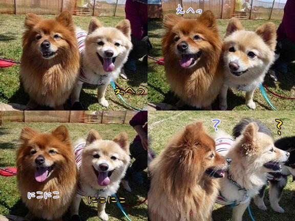 kinakoto130512_22-tile.jpg