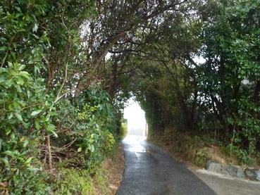 makinoki1304.jpg