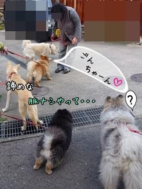 wansoyatsu130505_3.jpg