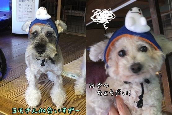 yomochan1310-horz.jpg
