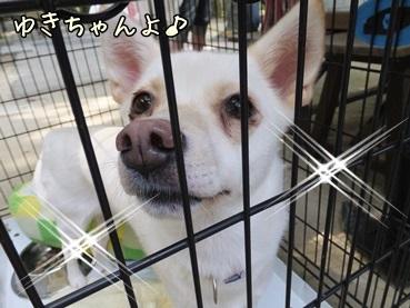yukichan130922.jpg