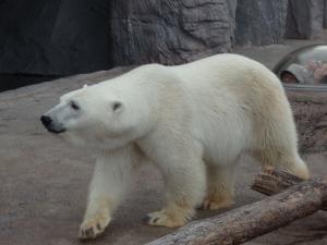 旭山動物園3 (800x600)