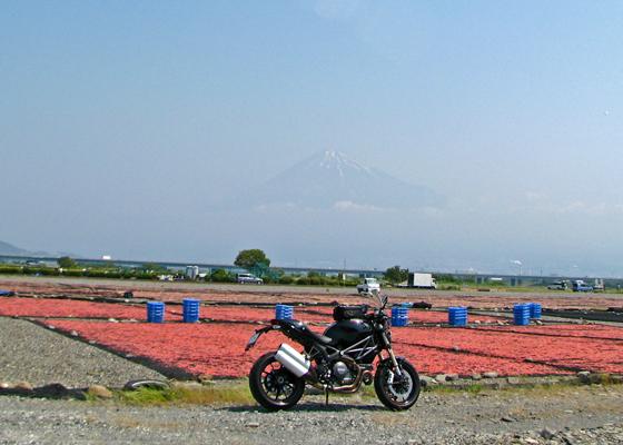 ピンクの絨毯に富士山?