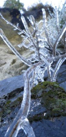 Wye Creek 6