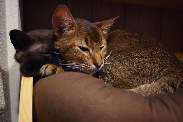 130530猫ベッド2