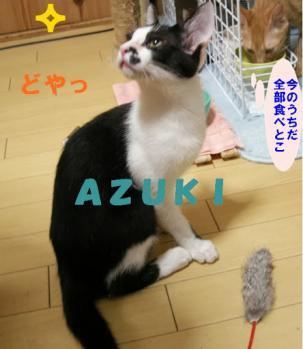 Azuki_doya.jpg