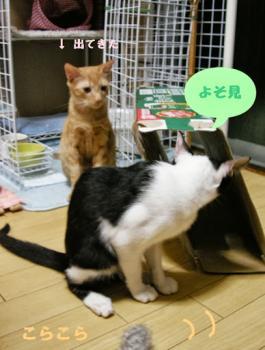 azuki_jala2.jpg