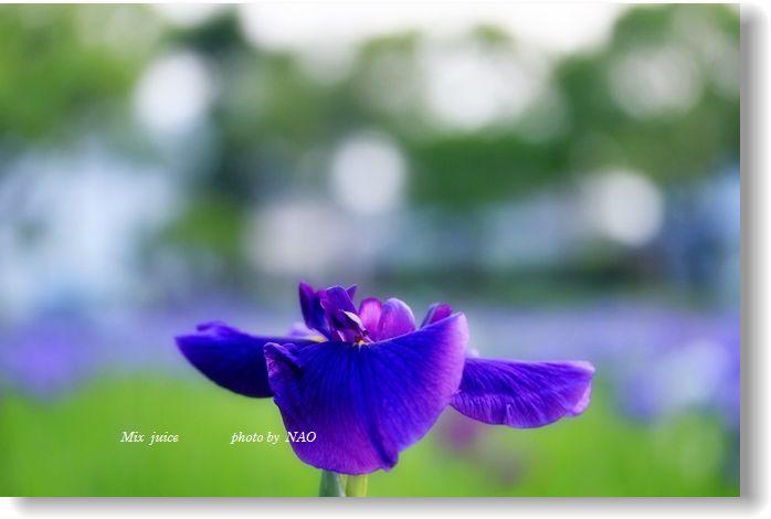 _MG_429500.jpg