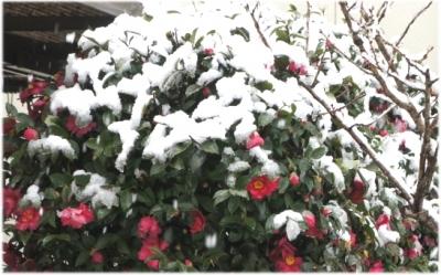 雪だ雪だ~♪