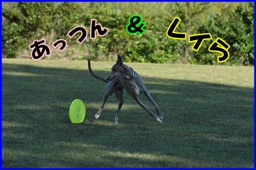 DSC_0821_20131030211508b1d.jpg