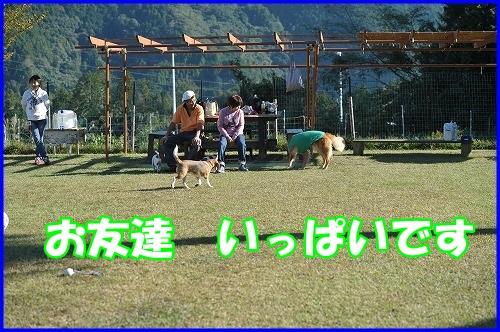 DSC_0825_20131030211509241.jpg