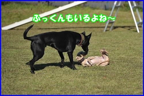 DSC_0828_201310302115104ed.jpg