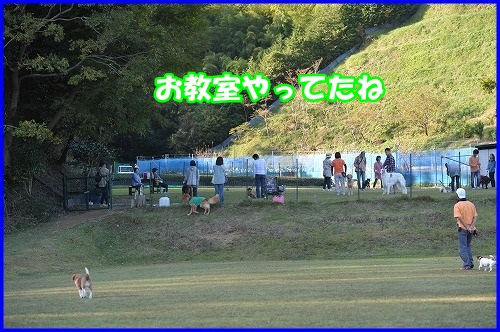 DSC_0869_20131030211741510.jpg