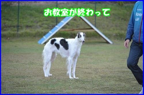 DSC_0873_20131030211841a79.jpg