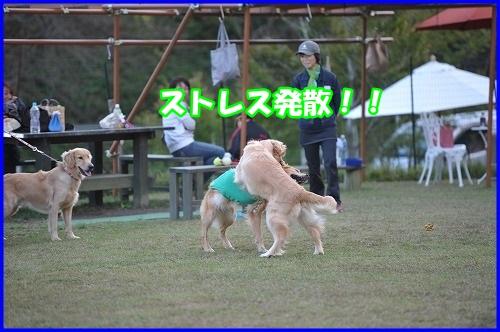 DSC_0876_201310302118438c0.jpg
