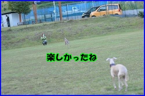 DSC_0901_20131030211919fc7.jpg