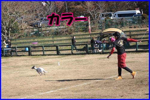 DSC_1529_201312052303268a6.jpg